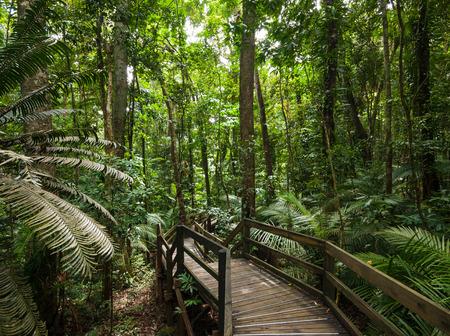 tropical rain forest in Cape Tribulation Australia, Daintree rainforest, an ancient jungle Stock Photo