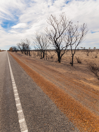 australian outback: Black burnt trees along side the highway after an Australian outback bush fire.