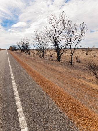 Black burnt trees along side the highway after an Australian outback bush fire.