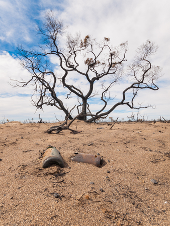A black burnt tree and burnt glass bottles in the Australian outback after a bush fire. Stock Photo
