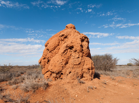 australian outback: A giant termite hill colony, made of red sand, in the western australian outback.