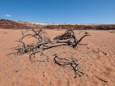 australian outback: A dead dry tree during a drought in the australian outback desert. Stock Photo