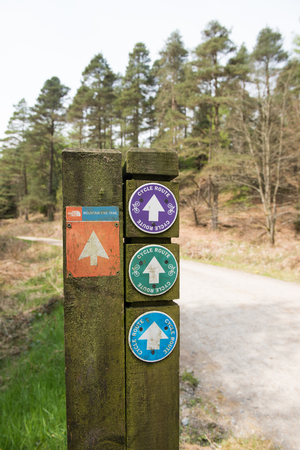 healthier: Grizdale forest, England, 06062016, North Face Trail, Cycle bicycle route signs on a wooden post in a forest, with a track disappearing into the distance Editorial