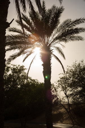 desert oasis: Palm tree silhouette at a desert oasis, during a sandstorm at sunset. Stock Photo