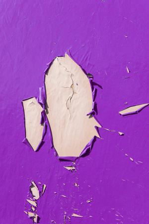 chipped paint: Purple dry peeling crackling chipped paint textured wall