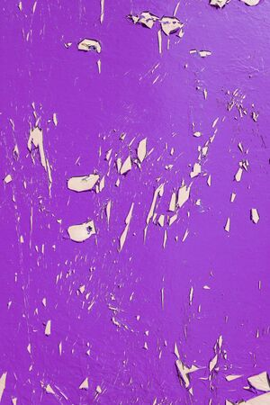 exfoliate: Purple dry peeling crackling chipped paint textured wall