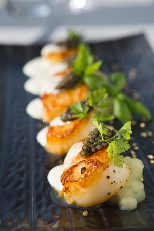 fished: Delicious pan seared organic scallops, served with celery puree, caviar, parsley and white wine cream sauce. Presented professionally and shot with a shallow depth of field.