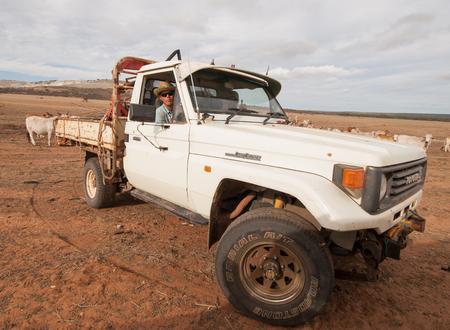 kalbarri, western australia, 05052016, A  4x4 toyota australian cattle truck in a sun drenched arid landscape,rounding up wild australia cattle on a cattle ranch. 新聞圖片