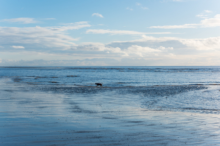 relaxing and gentle calming waves flowing into a beach at sundown with a vivid blue sky
