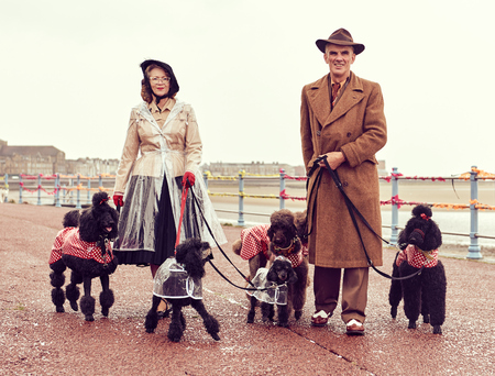 london, england, 05/07/2017 , A retro and well dressed vintage couple on a retro seaside promenade, walking a pack of poodle dogs at a vintage nostalgic weekend event fair. Vintage street style.
