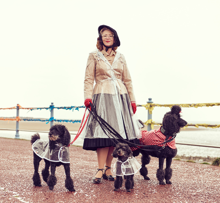 london, england, 05072017 , A retro and well dressed vintage woman on a retro seaside promenade, walking a pack of poodle dogs at a vintage nostalgic weekend event fair. Vintage street style.