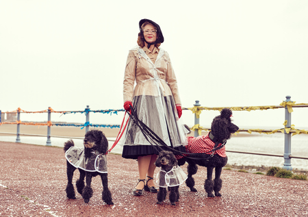 london, england, 05/07/2017 , A retro and well dressed vintage woman on a retro seaside promenade, walking a pack of poodle dogs at a vintage nostalgic weekend event fair. Vintage street style.