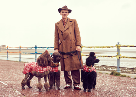 london, england, 05/07/2017 , A retro and well dressed vintage man on a retro seaside promenade, walking a pack of poodle dogs at a vintage nostalgic weekend event fair. Vintage street style. Editorial