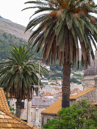 dubrovnik, Croatia, 06062016 Dubrovnik old town croatia, rooftop view and palm trees.