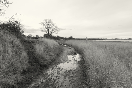 A moody gloomy wet muddy dirt track on a winters day in the countryside in england. Dark, sinister, lonely and depressing pathway. Photographed in black and white.