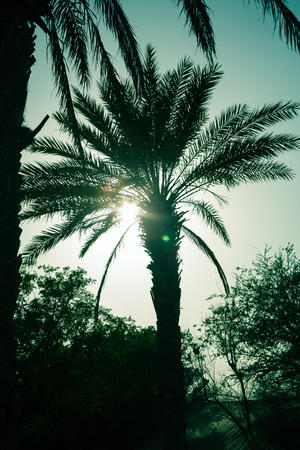 Arty Palm tree silhouette at a desert oasis, during a sandstorm at sunset. Atmospheric backlit palm tree. aqua blue colour palette. Stock fotó