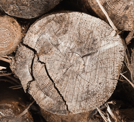 A close up texture shot of a stock pile of timber, chopped down trees to make clear for farming crops. De-forestation and devastation of woodland and countryside. Stock fotó