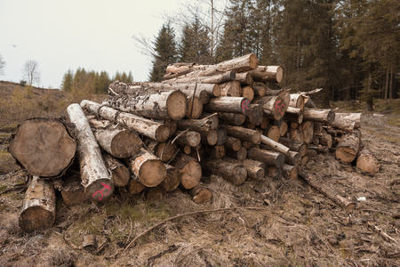 A stock pile of timber, chopped down trees to make clear for farming crops. De-forestation and devastation of woodland and countryside.