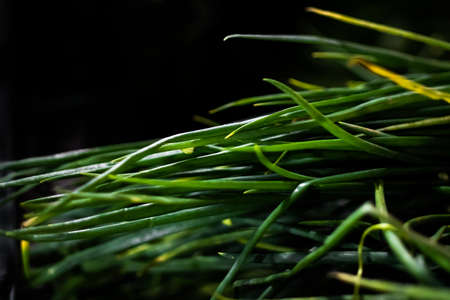 Beautiful green leafy Spring Onion shot with side lighting, selective focus and blurred background Stockfoto