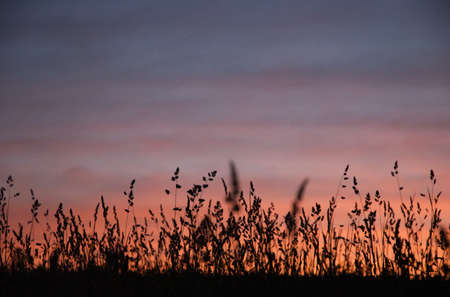 Tall grass silhouette with beautiful sunset Stock Photo