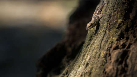 brown lizard on a dry trunk Banco de Imagens