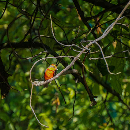 small bird of red color on branches