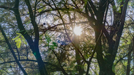 Sunlight sneaking between the branches of the trees, giving a beautiful contrast Banco de Imagens