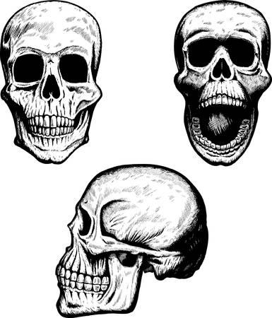profile: Three skulls Illustration