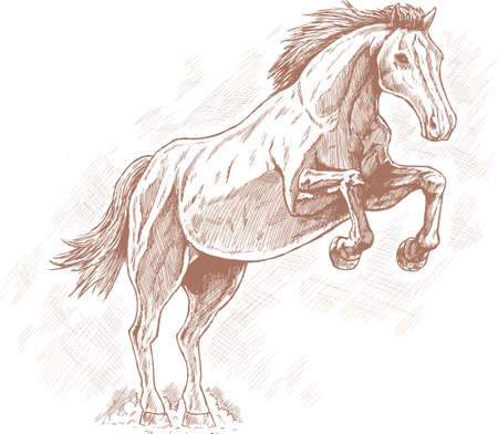 rearing: Drawing of horse. Illustration