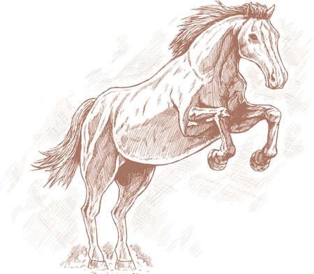 Drawing of horse. Stock Illustratie