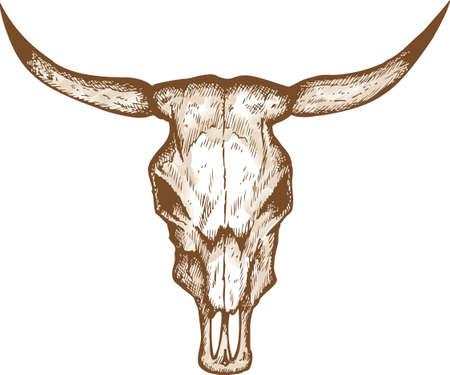 skull drawing: Bull skull