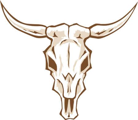 Bull schedel