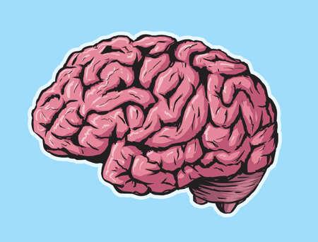 brain stem: Brain
