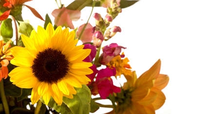bouqet: Spring Flower Bouqet Border focussing on sunflower. Stock Photo