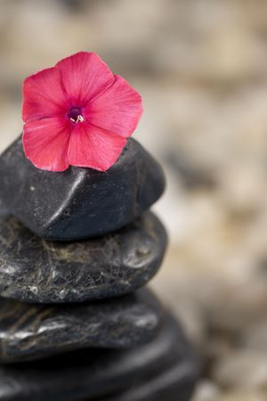 Zen and Balance concept featuring stones stacked on a bed of pebbles, with a beautiful Phlox flowers on the stones as a focal point.