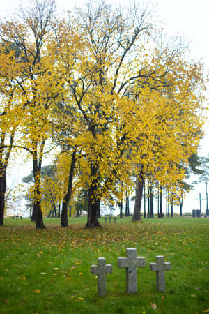 Three tombstone crosses and big tree with yellow leaves  Cemetery of German soldiers in Toila, Estonia  Autumn  photo