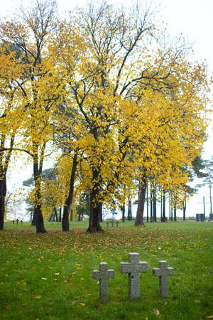 memorial cross: Tres cruces y lápidas gran árbol con hojas amarillas Cementerio de soldados alemanes en Toila, Estonia Autumn
