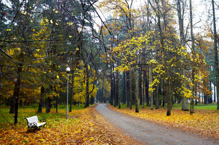 A curving autumn road in the park Stock Photo - 16675724