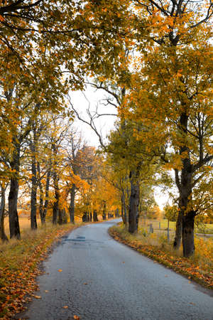 A curving autumn road  Stock Photo - 16675768