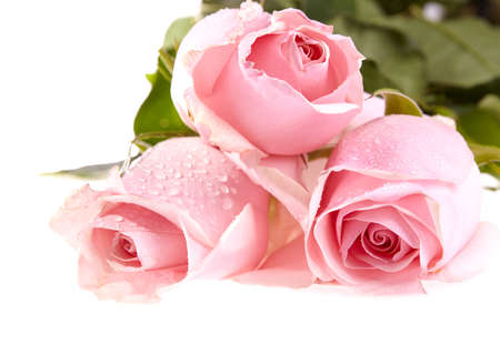 Three pink roses with water drops and green leaves on white background