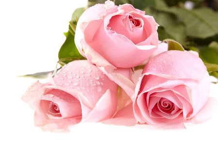 흰색 배경에 물 방울과 녹색 잎 세 핑크 장미 스톡 콘텐츠