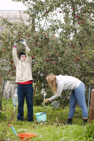 Father and daughter out collecting fresh apples in the orchard photo