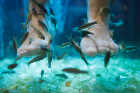 doctor fish: Fish spa pedicure wellness skin care treatment with the fish rufa garra, also called doctor fish, nibble fish and kangal fish