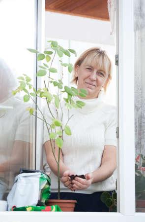 replant: Lady aggiungendo suolo in pentola con piccola pianta