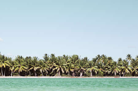 green landscape: Beautiful exotic landscape with palm trees along the sea shore and clear blue water