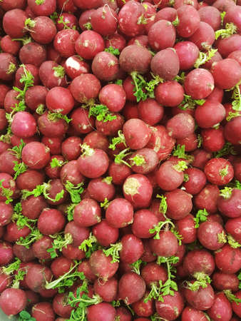 A close up shot of a big amount of fresh red radishes with small green tails