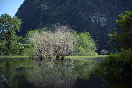 Landscape with dry trees in water among the greenery against limestone mountain in Trang An, Vietnam