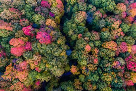 folliage: Fall Foliage