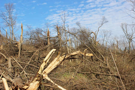 snapped: Tornado aftermath in wooded area