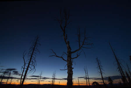 The horizon glows after sunset, with the silhouettes of dead trees in the foreground.